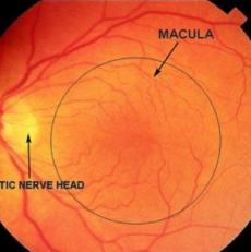 Retinofotografía retinal